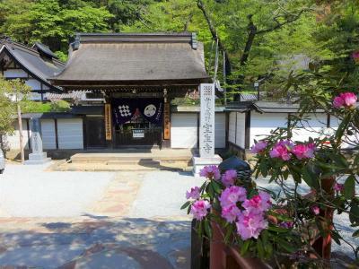 石楠花が早くも満開です  !  室生寺