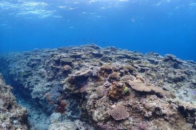 沖縄旅行 4泊5日(2) 慶良間諸島~シェラトンサンマリーナ