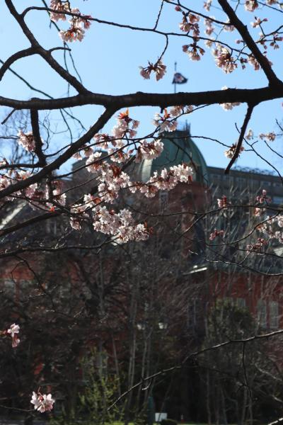 桜の名所散策