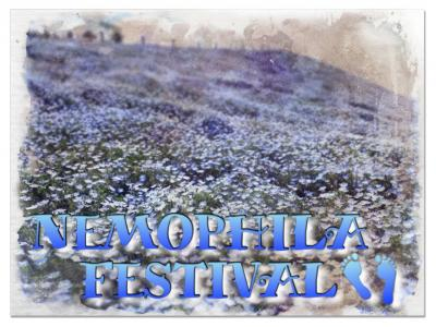 マイクロツーリズム、舞洲のネモフィラ祭り編 2021年4月
