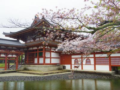 2021年4月 京都と奈良でお花見(5)宇治の桜