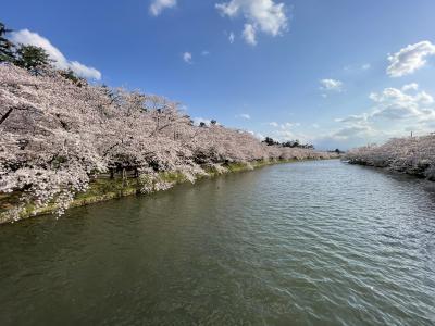 2021  弘前 桜旅 さくら・サクラ・桜 弘前公園 弘前さくらまつり 青空編