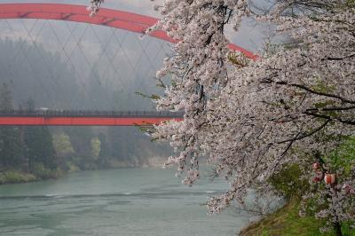 桜咲く春の会津柳津へ