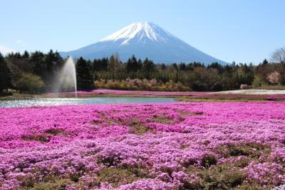 春の花々と富士山