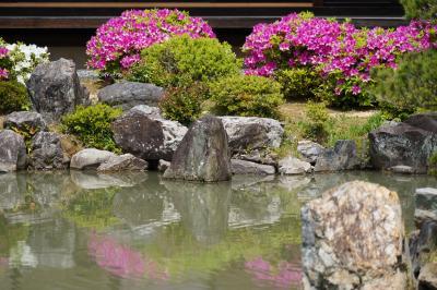 20210423-2 京都 智積院の名勝庭園、躑躅咲いてますねぇ