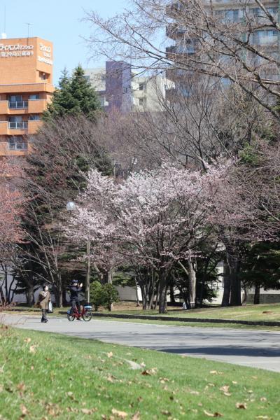 桜を求めて今日もお散歩