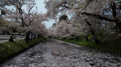 北東北と函館の桜