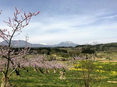 長野市内から車で30分 丹霞峡の桃と北信五岳の絶景と、飯綱東高原のむれ水芭蕉園へ