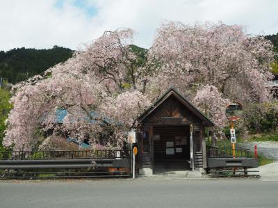 東京で一番遅い春を楽しみながら 浅間嶺日帰り登山