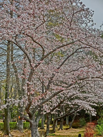 2021・岡山県内をドライブ旅(その1)桜を眺めに
