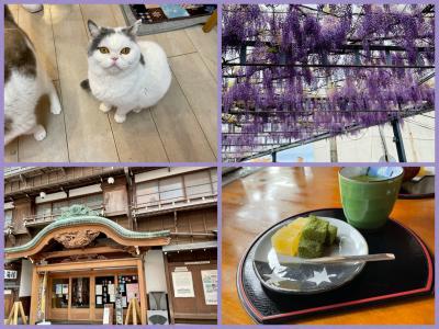 ノープラン伊東温泉 市内散策 元猫カフェ~藤広場~東海館 vol3(完)