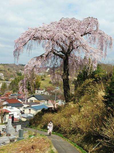 福島2021桜 【3】三春町中
