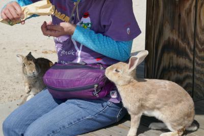 CRESSONで行く~ウサギの島 大久野島
