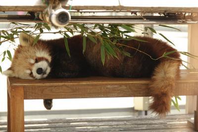 徳山動物園 緊急事態や蔓防の間隙を突いて1年1ヶ月ぶりの徳山動物園!! 平和にお昼寝する風花さんの姿に久々に心が癒されました