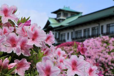蒲郡クラシックホテルのつつじ♪&竹島水族館のお魚♪&魚々の里 とまりんの海鮮丼♪