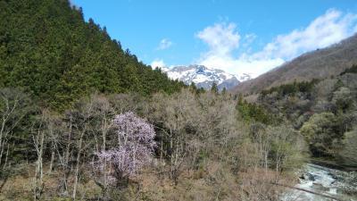 春の谷川温泉、緊急事態宣言前の花見旅