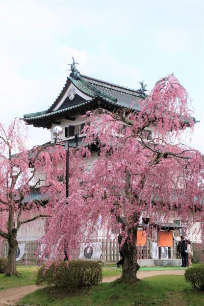 2021 弘前公園・午後の桜
