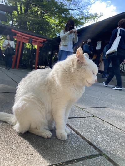 新緑巡り 後編 芝公園から愛宕神社へと出世の石段を登るとそこには猫神様が!!