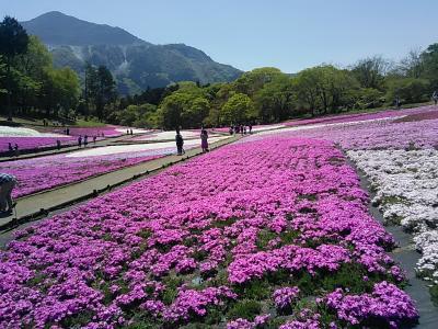 季節の街歩き2021年4月+5月おまけ Town walk of the season/April