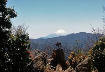 新緑の奥多摩、本仁田山に登ってみた
