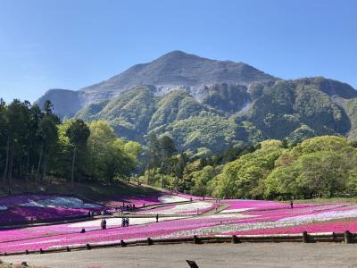 秩父羊山公園の芝桜と長瀞岩畳とかき氷。もちろん一人旅の2021年4月22日。