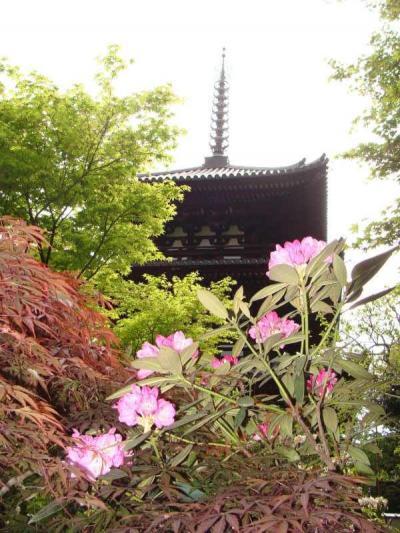 関西花の寺  !  當麻寺・西南院