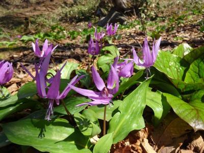 有珠善光寺自然公園で草花を楽しむハイキング