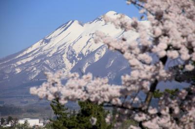 2021 弘前公園・朝の桜