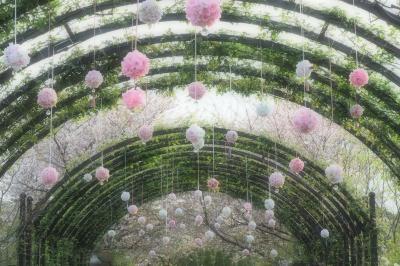 桜色の光の中で☆春の横浜イングリッシュガーデン