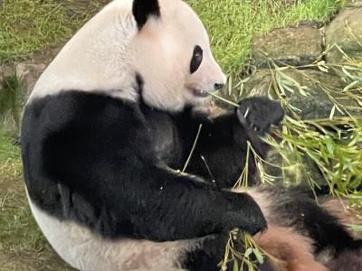 パンダに会いたくて雨の中、アドベンチャーワールドに行ってきました。