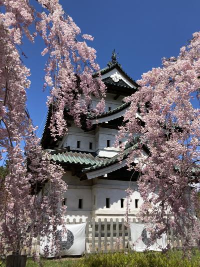 桜を見に、日帰り弾丸弘前一人旅