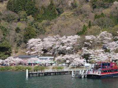 往復フェリー利用で京都・琵琶湖の桜を愛でる一人旅 海津大崎桜クルーズ編