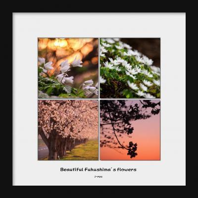 ◆福島・四季・彩々・Part93~春の野の花巡り ①
