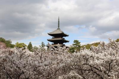京都桜さんぽ2021 醍醐寺、仁和寺、二条城