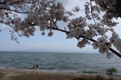 びわ湖と桜