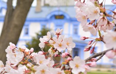 北海道にも春が来た-!2021年GW*晴れたらいいね*札幌さくら散歩.☆*