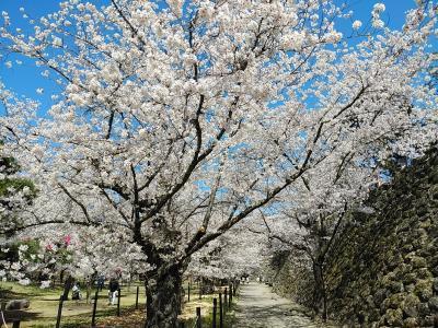 信州2021桜 【2】小諸懐古園2