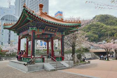 2021 春・神戸花咲(地下鉄沿線の川沿いの三桜)
