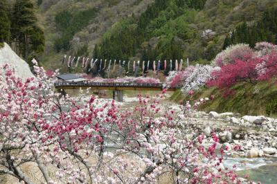 2021年4月23日 花桃の里 月川温泉郷
