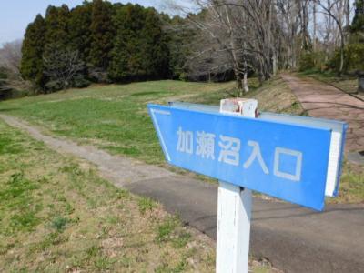 冬鳥で出会えた春の加瀬沼散策【多賀城史跡】(5)!