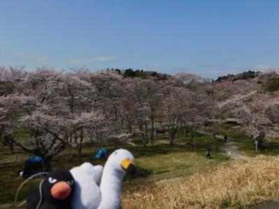 歴史ロマンと花鳥散歩【多賀城史跡】(6)!