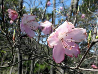 奥武蔵・蕨山の春