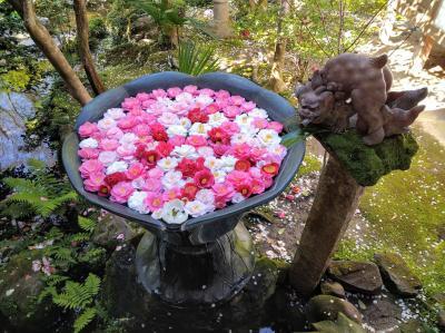 京都 春の特別公開 法然院の椿に魅せられて2021