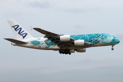 巨大ウミガメ飛行機に会いに。