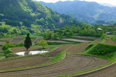 2021年初夏の高千穂 その2~棚田と槵觸神社周辺を歩く