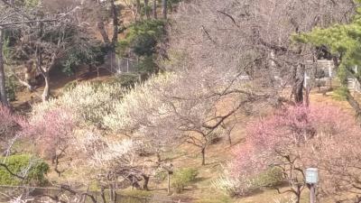 大倉山公園の梅林めぐり