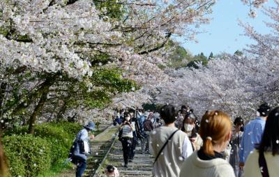 京都市内の桜・その1(哲学の道・円山公園・インクライン)
