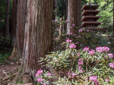 GWに石楠花咲く女人高野室生寺へ