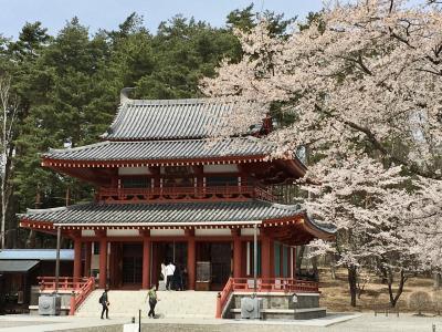 2021年4月22日~24日 長野県 お花見 テラス蓼科リゾート&スパでまったり!