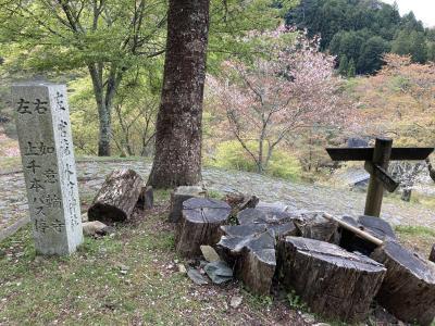 【日本一の吉野の桜を求めて】吉野駅から奥千本まで足で登ったぞ!